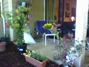 Garden - partio September 2012