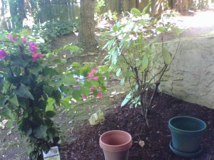 Garden - right side view with bouganvillea
